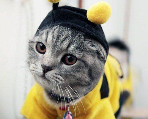 Copii tăi vor ca și animalele lor să se costumeze de Halloween? Haideți să-i ajutăm - RevistaMargot.ro