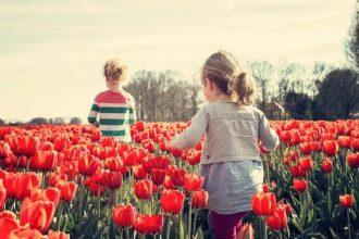 Ce trebuie să știi despre sistemul educațional din Olanda - Partea I - RevistaMargot.ro