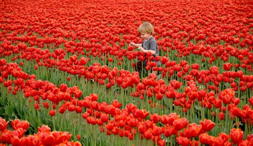 Învață 7 lecții de parenting de la olandezi - RevistaMargot.ro